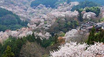 yoshinoyama.jpg